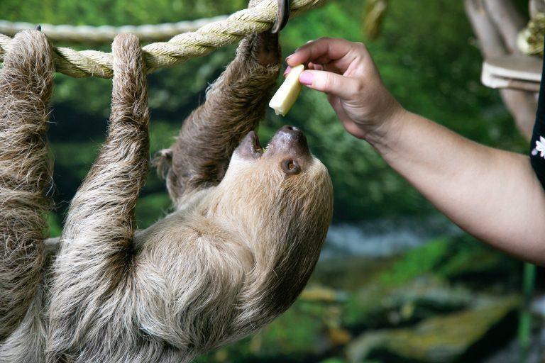 Tanganyika Wildlife Park International Sloth Day 2021