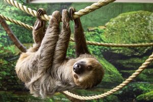 International Sloth Day 2021